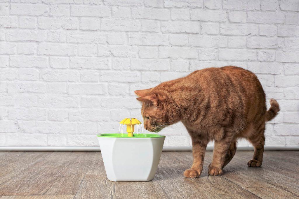 gato bebendo agua produtos pet